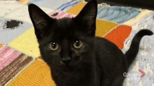 Adopt a Pet: Turbo the cat (04:06)