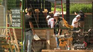 Alberta workers sweating through heat wave find ways to make it bearable (02:00)
