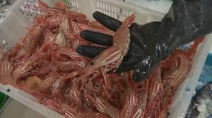 Regulatory hurdle puts B.C.'s spot prawn industry at risk (04:37)