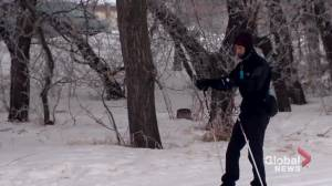 Saskatoon ski club sees rise in number of people on trails (01:51)