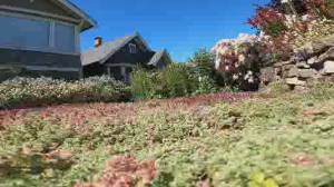 Open House: lawn alternatives to traditional grass (02:34)