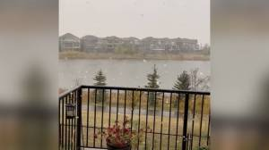 Snow fills the air in 2 Alberta cities as system passes through region (00:32)