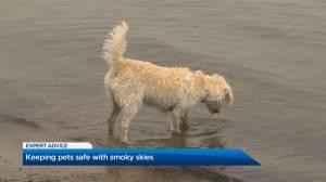 Keeping pets safe with smoky Okanagan skies (01:39)