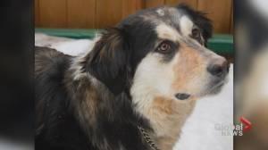 Calgary pets to keep you company