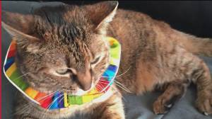 Colourful cat collars could help save birds: study (00:55)