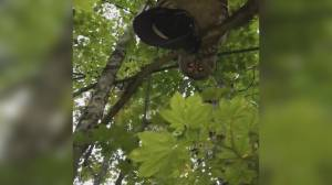 Owl attack leaves Fraser Valley man without his hat