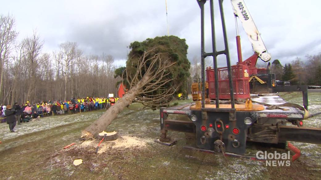 Nova Scotia's annual tree for Boston bundled up and on the road to Halifax