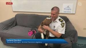 Responsible pet ownership (04:46)