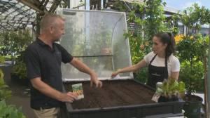 GardenWorks: Fall Veggies