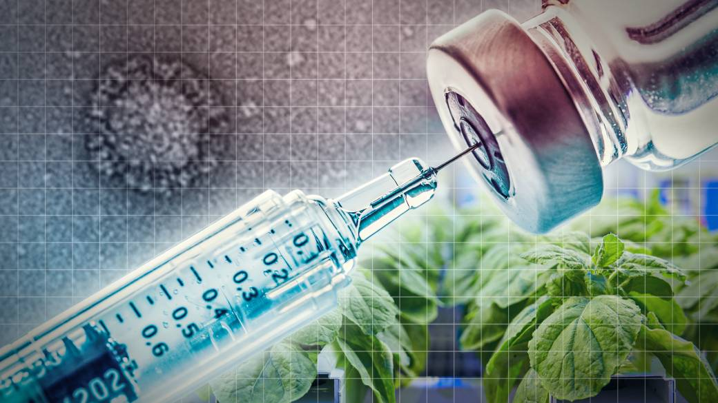Click to play video: 'Plants key for Canada's COVID-19 vaccine contender'