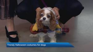 Trendy Halloween costumes for pets