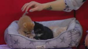 Bundle of kittens almost ready for adoption at Saskatoon SPCA