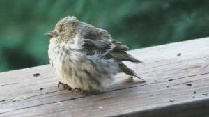 Bird feeders blamed for deadly salmonella outbreak (01:56)