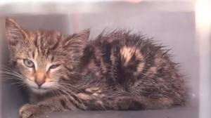 Kitten lodged inside car engine rescued outside Northumberland Mall