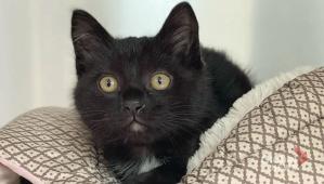 Adopt a Pet: Spitz the cat (04:33)