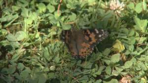 Butterflies released at B.C. care homes to honour those lost during pandemic (01:14)