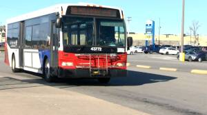 Sunday bus service returns to streets of Saint John (01:35)