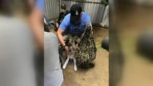 Durham region vet helps animals affected by Australian wildfires