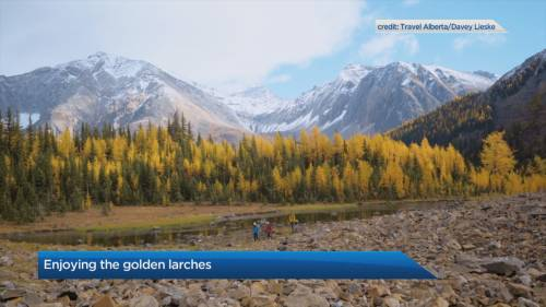 Hikes to see the golden larches | Watch News Videos Online