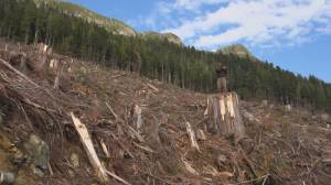 Report finds clearcutting major contributor to carbon emissions