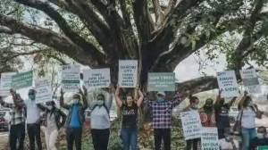 Environmental activists celebrate as Kenya spares sacred fig tree from destruction (02:38)