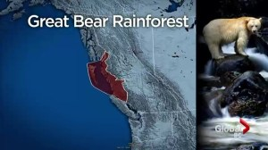 Deal reached to protect more Great Bear Rainforest land