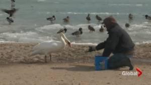 Saving the birds creating controversy.