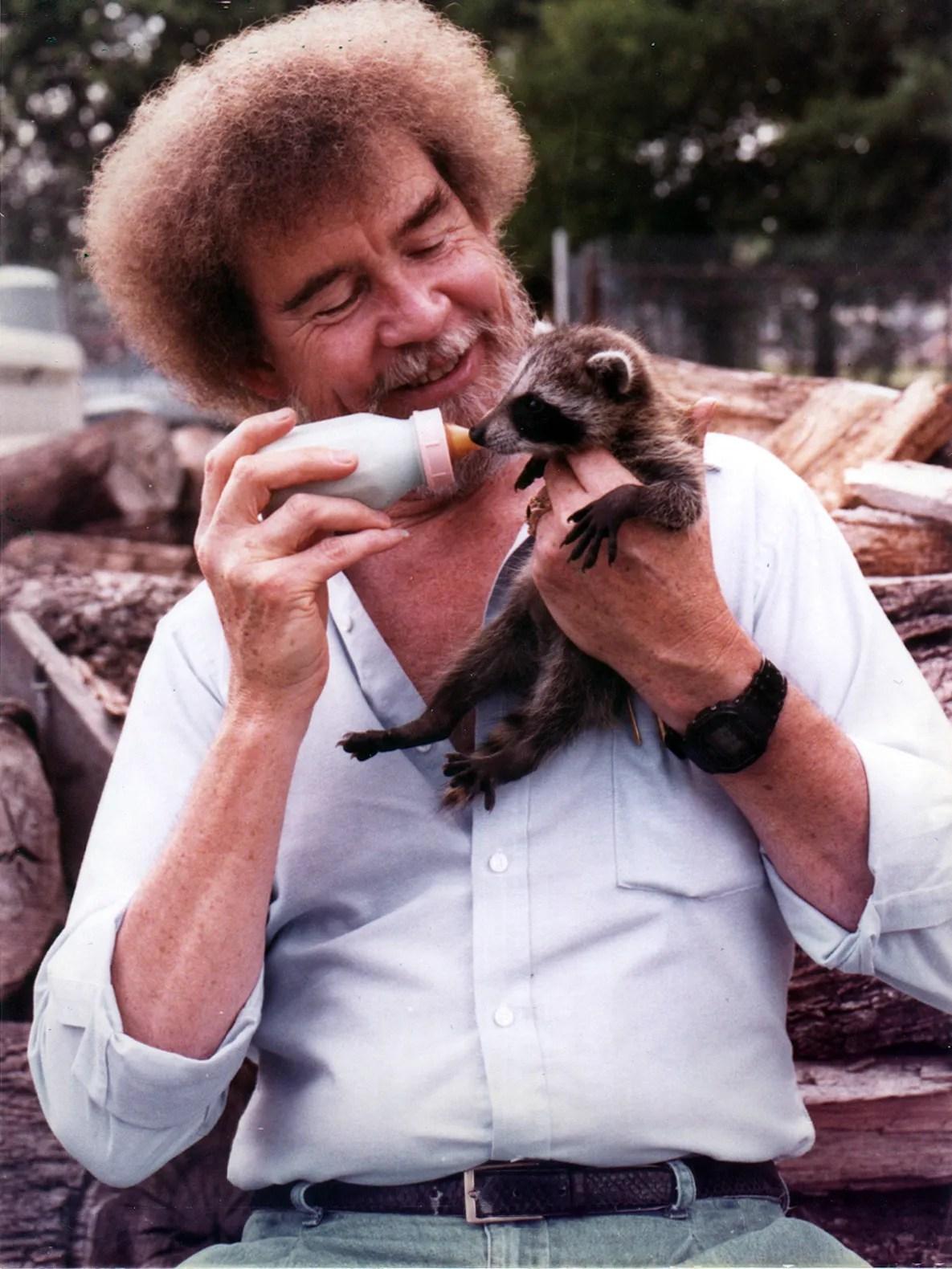 bob ross looking fly and feeding a baby raccoon