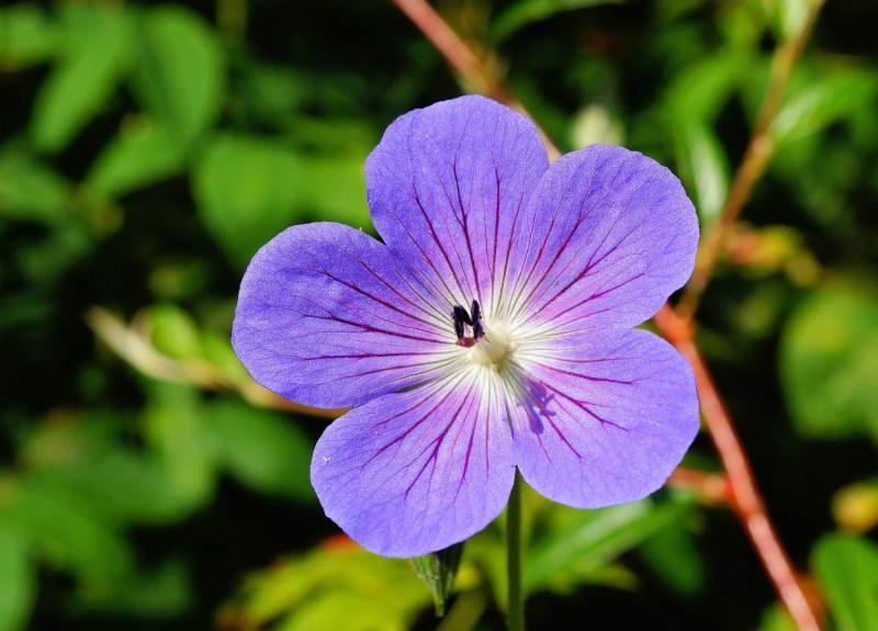flower-397975_1920