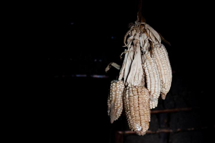 Dried maize hangs from the ceiling of a shelter at the Katanika displacement settlement