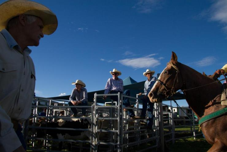 Competitors at the Wanaka rodeo.