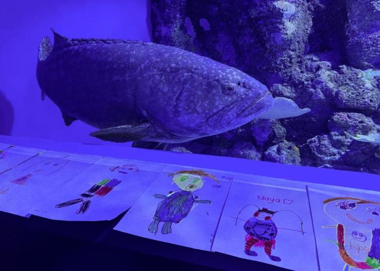A Queensland grouper named Chang with fan mail from schoolchildren sent to cheer him up.