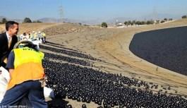 ابتکار کالیفرنیا برای مقابله با خشکسالی – الگویی بینظیر برای دیگر کشورها