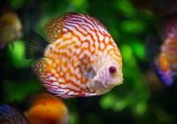 ماهیها، پروتئین شناور در آب یا موجوداتی پیچیده؟!
