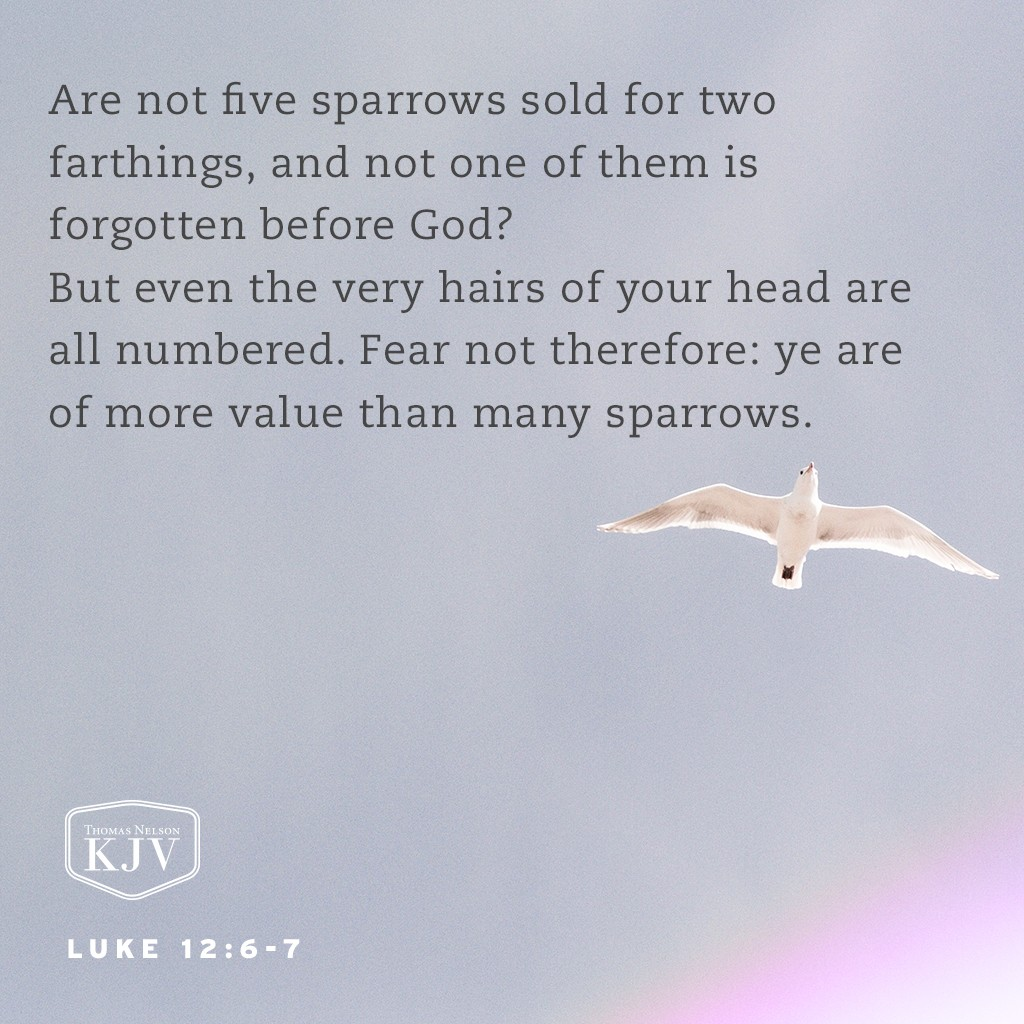 6 Are not five sparrows sold for two farthings, and not one of them is forgotten before God?  7 But even the very hairs of your head are all numbered. Fear not therefore: ye are of more value than many sparrows. Luke 12:6-7