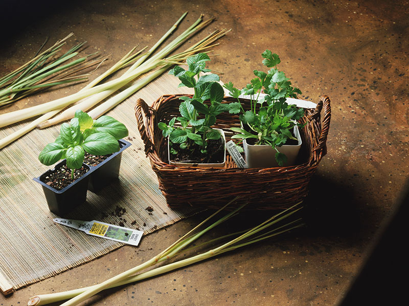 News Picture: Essentials for Growing Tasty Herbs on Your Windowsill