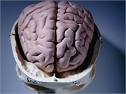 News Picture: Differences Found in Brains of Kids Born to Depressed Parents