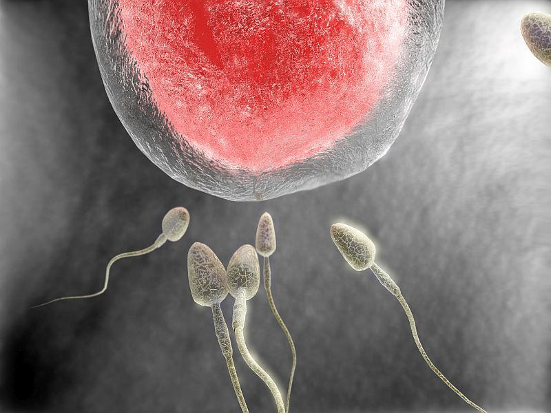 News Picture: Allow Dead Men to Be Sperm Donors, Medical Ethicists Say