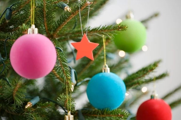 Image result for real christmas tree