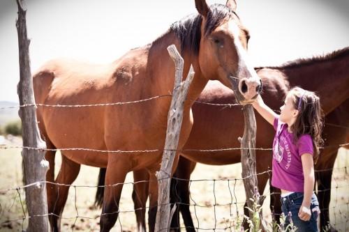 llano horses