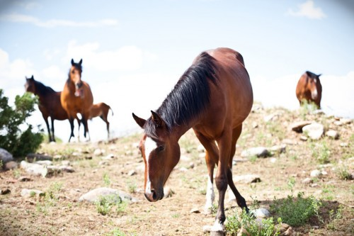 llano horse