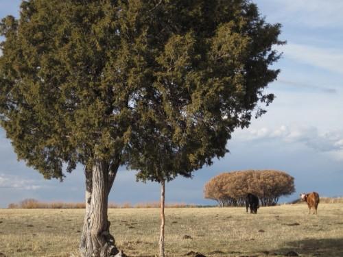 spanish land grant