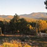 The Road to Cordova, Truchas, NM