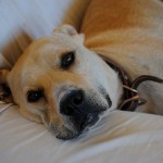 Eleven Reasons I Love Rescue Dogs