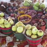 Pojoaque Pueblo Farmer's Market