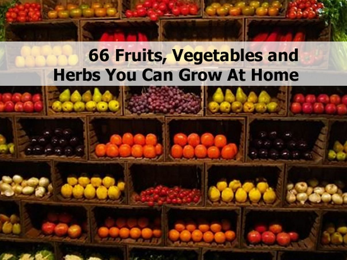 66 Fruits, Vegetables And Herbs You Can Grow At Home