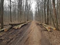 Exploatare Pădurea Băneasa