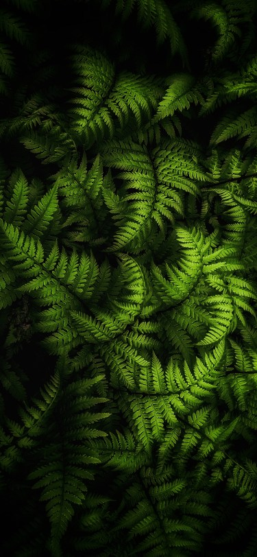 Nature photography iPhone wallpaper wallsbyjfl ferns highlight