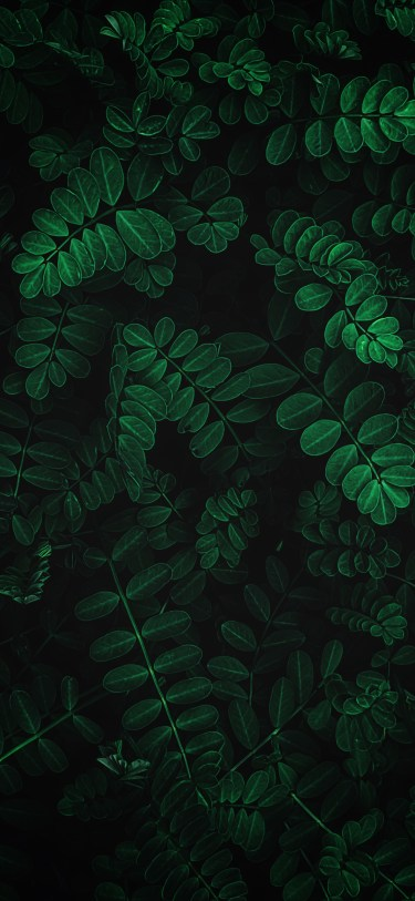 Nature photography iPhone wallpaper wallsbyjfl ferns