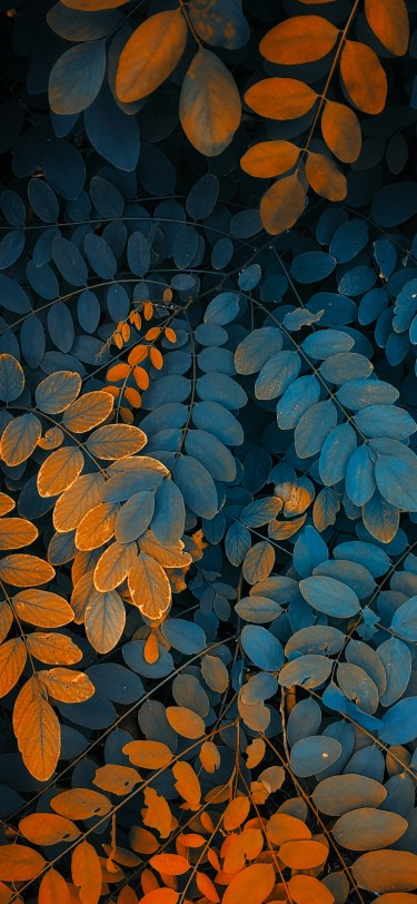 Nature photography iPhone wallpaper wallsbyjfl orange green fern